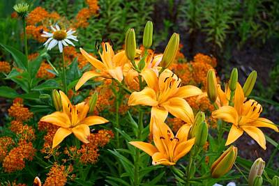 Art Print featuring the photograph Orange Asiatic Lilies And Butterfly Weed by Kathryn Meyer