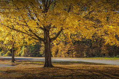Photograph - Orange Autumn Foliage In The State Park By Gun Lake by Randall Nyhof