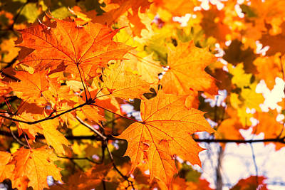 Photograph - Fall Of Orange Leaves by John Williams