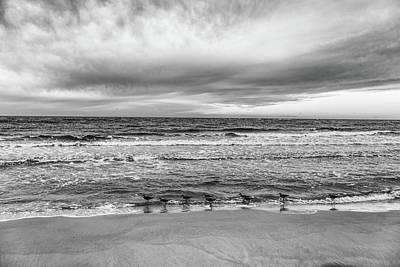 Photograph - Orange Beach And Birds Morning  by John McGraw