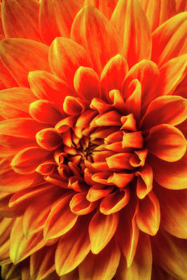 Photograph - Orange Beauty by Garry Gay