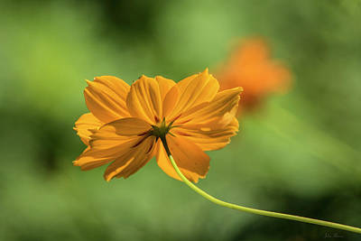 Photograph - Orange Beauty by John Rivera