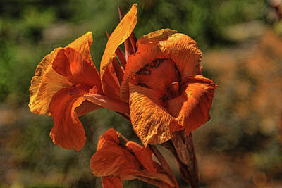 Photograph - Orange Beauty by Rick Friedle