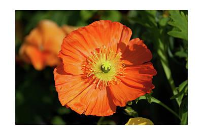 Photograph - Orange Beauty by Tatiana Travelways