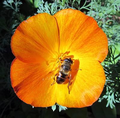 Photograph - Orange Bees by Vesna Martinjak
