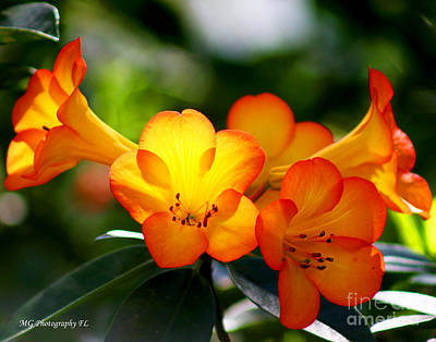 Photograph - Orange Bells  by Marty Gayler