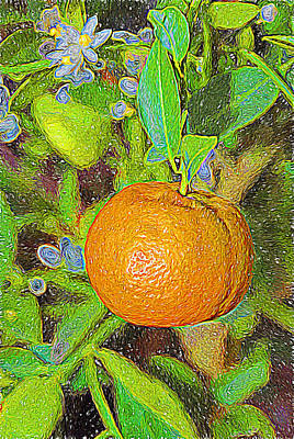 Photograph - Orange by Bill Howard