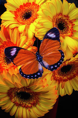 Orange Black Butterfly Among Gerberas Art Print by Garry Gay