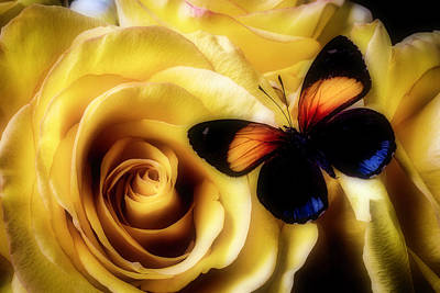 Beautiful Butterfly Photograph - Orange Black Butterfly And Roses by Garry Gay