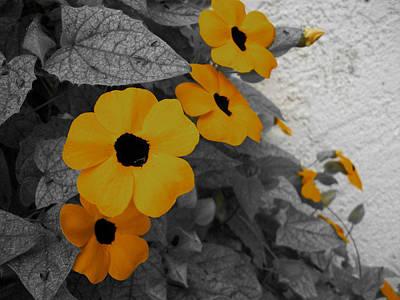 Orange Black Eyed Susan Art Print by Flower Bomb