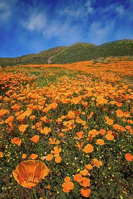 Photograph - Orange Bliss - California Superbloom 2017 by Lynn Bauer