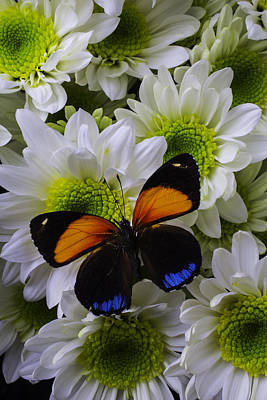 Orange Blue Butterfly On Poms Art Print