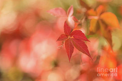 Photograph - Orange Bokeh by Karin Pinkham