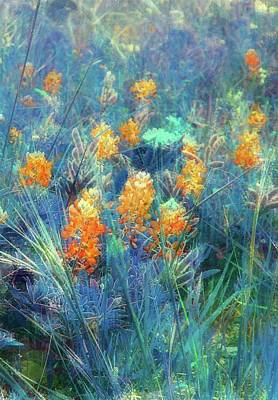Photograph - Orange Bonnets by Ellen Barron O'Reilly