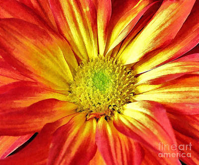 Art Print featuring the photograph Orange Burst by Allen Beatty