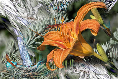 Photograph - Orange Burst.... by Paul Vitko