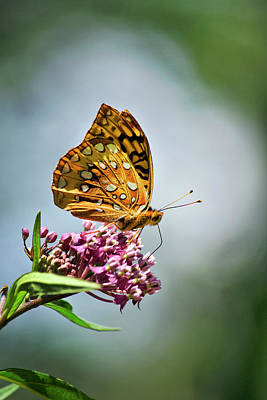 Photograph - Orange Butterfly by Christina Rollo