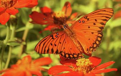 Photograph - Orange Butterfly by Donna G Smith