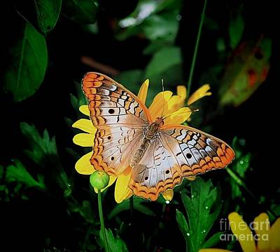 Photograph - Butterfly by Buddy Morrison