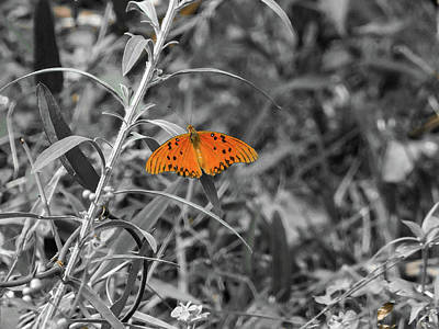 Orange Butterfly In Black And White Background Art Print