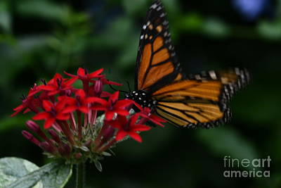 Photograph - Orange Butterfly by Janice Spivey