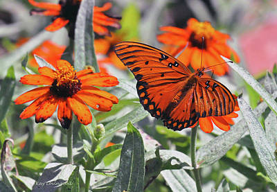 Photograph - Orange Butterfly by Kay Lovingood