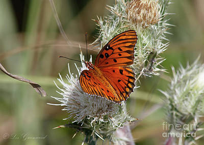 Orange Butterfly Art Print