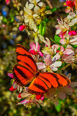 Beautiful Butterfly Photograph - Orange Butterfly On Flowering Tree by Garry Gay