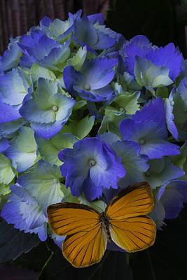 Orange Butterfly On Hydrangea Art Print