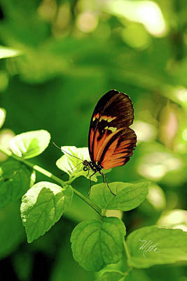 Photograph - Orange Butterfly On Leaf by Meta Gatschenberger