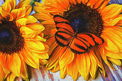 Chrysanthemums Photograph - Orange Butterfly On Sunslower by Garry Gay