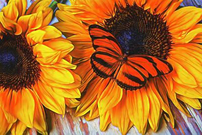 Orange Butterfly On Sunslower Art Print