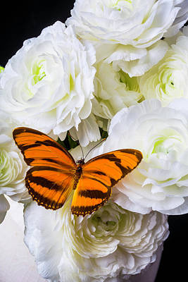 Ranunculus Wall Art - Photograph - Orange Butterfly On White Ranunculus by Garry Gay