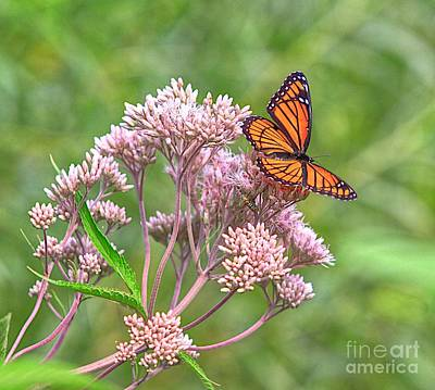 Blue Swallowtail Photograph - Orange Butterfly by Robert Pearson