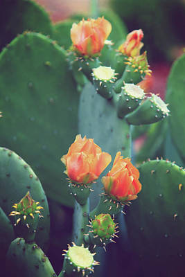 Photograph - Orange Cactus Bloom by Toni Hopper