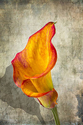 Orange Calla Lily Print by Garry Gay