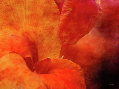 Photograph - Orange Canna 4206 Idp_2 by Steven Ward