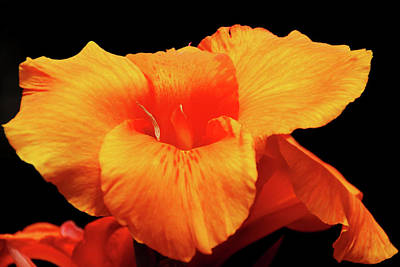 Photograph - Orange Canna Lily by Debbie Oppermann