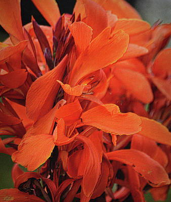 Photograph - Orange Canna Lily by Nadalyn Larsen
