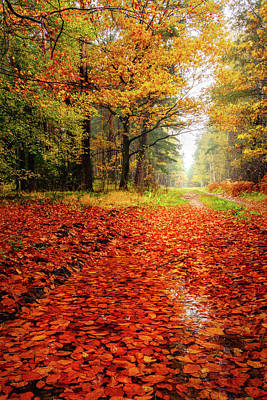 Photograph - Orange Carpet by Dmytro Korol
