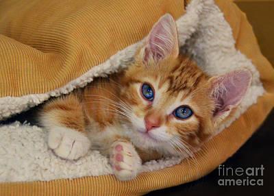 Orange Kitten Tucked Into Bed Art Print by Catherine Sherman