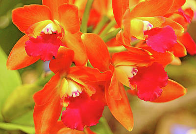 Photograph - Orange Cattleya Orchid by Debbie Oppermann