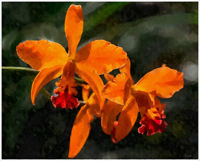 Digital Art - Orange Cattleya Orchid by Kai Saarto