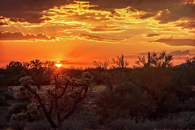 Photograph - Orange Cholla Sunset  by Saija Lehtonen