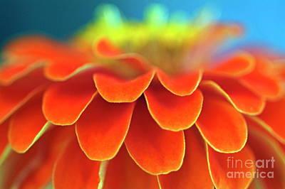 Zinnia Elegans Photograph - Orange Common Zinnia by Sami Sarkis