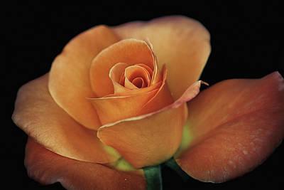 Photograph - Orange Cream by Elaine Malott