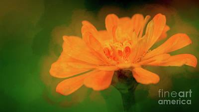 Orange Crush Photograph - Orange Crush by Doug Sturgess