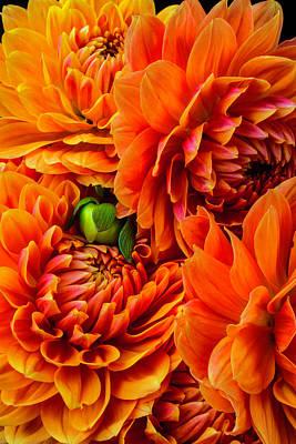 Photograph - Orange Dahlia Bouquet by Garry Gay