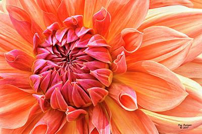 Photograph - Orange Dahlia by Peg Runyan