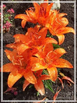 Photograph - Orange Day Lilies Painted by Barbara Griffin